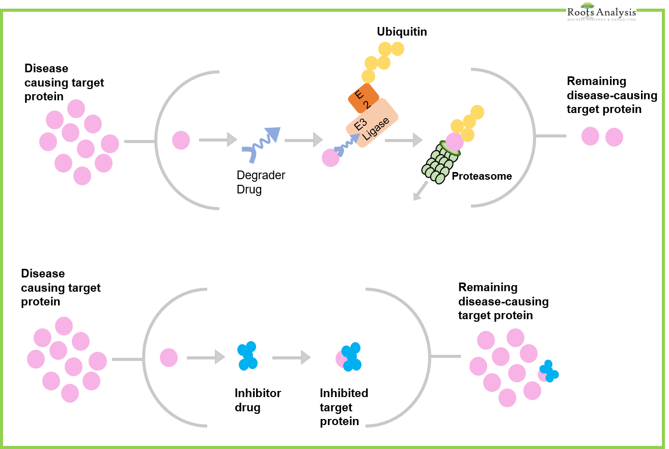 Difference Between Protein Degrader and Protein Inhibitor